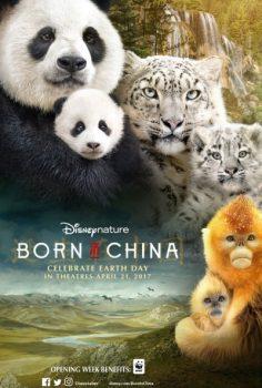 Çin 'de Doğdum izle