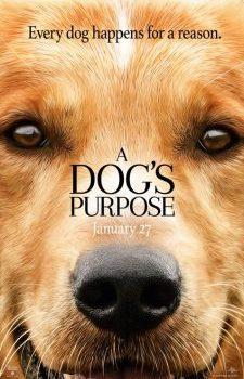 Can Dostum – A Dogs Purpose izle